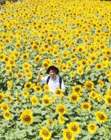 菊地ブログ ひまわり2